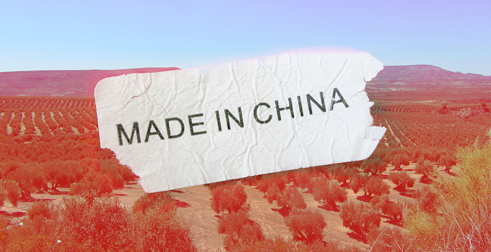 China pretende fabricar aceite de oliva