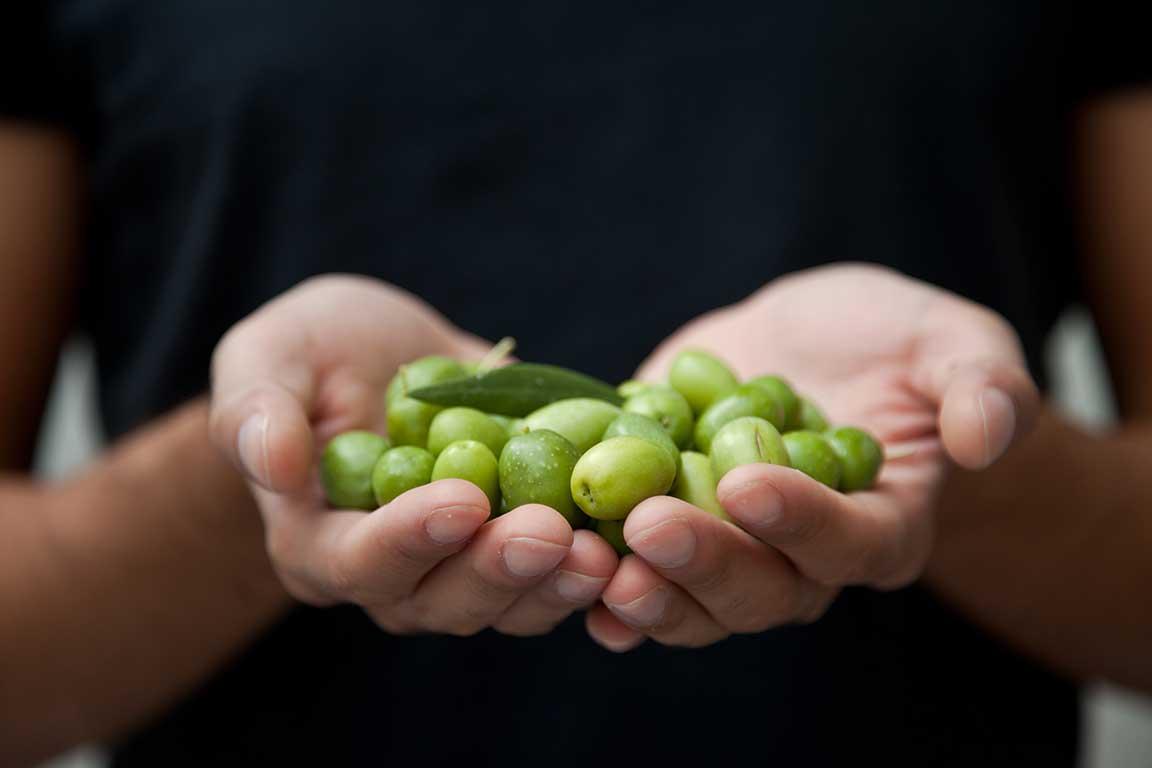 Conocer para valorar el aceite de oliva IX