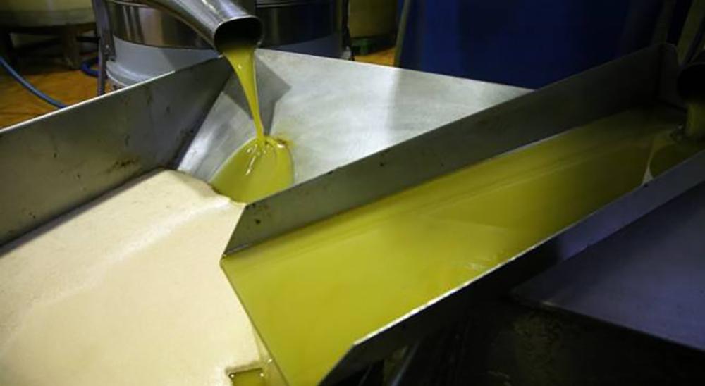 Conocer para Valorar el aceite de oliva VI