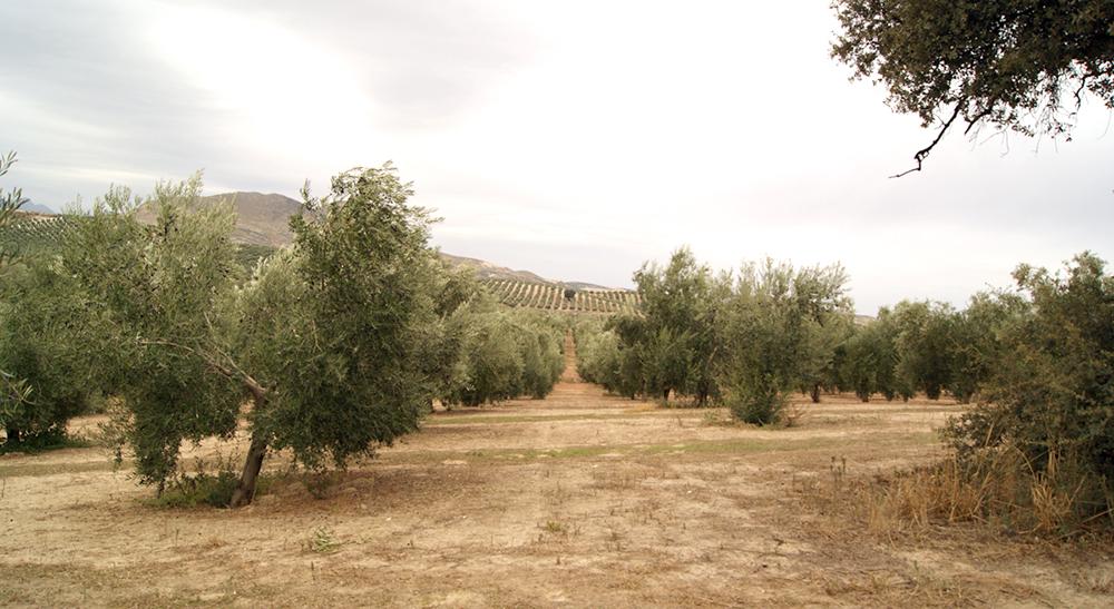 La mala cosecha en el campo español