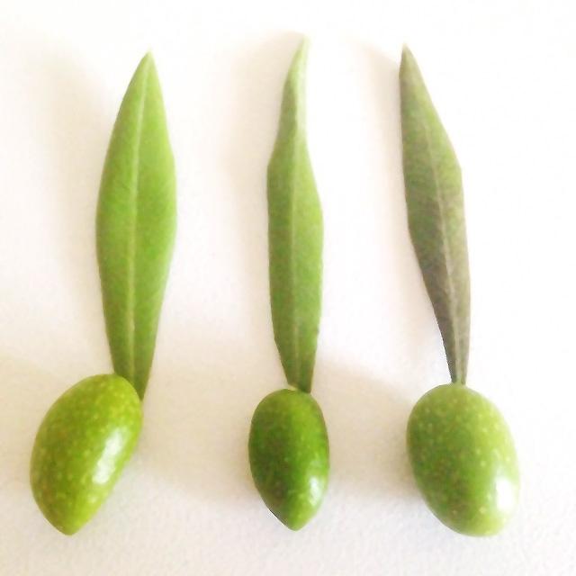 Variedades de aceitunas empleadas en DonLope