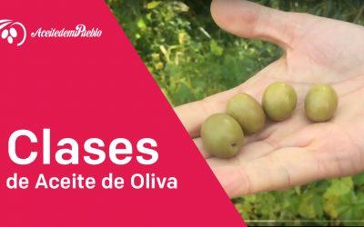 Clases de Aceite de Oliva «Video»