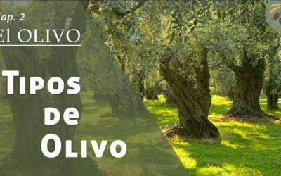 Tipos de Olivo «Video»