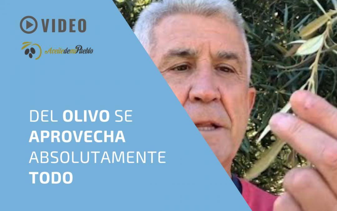 DEL OLIVO SE APROVECHA ABSOLUTAMENTE TODO