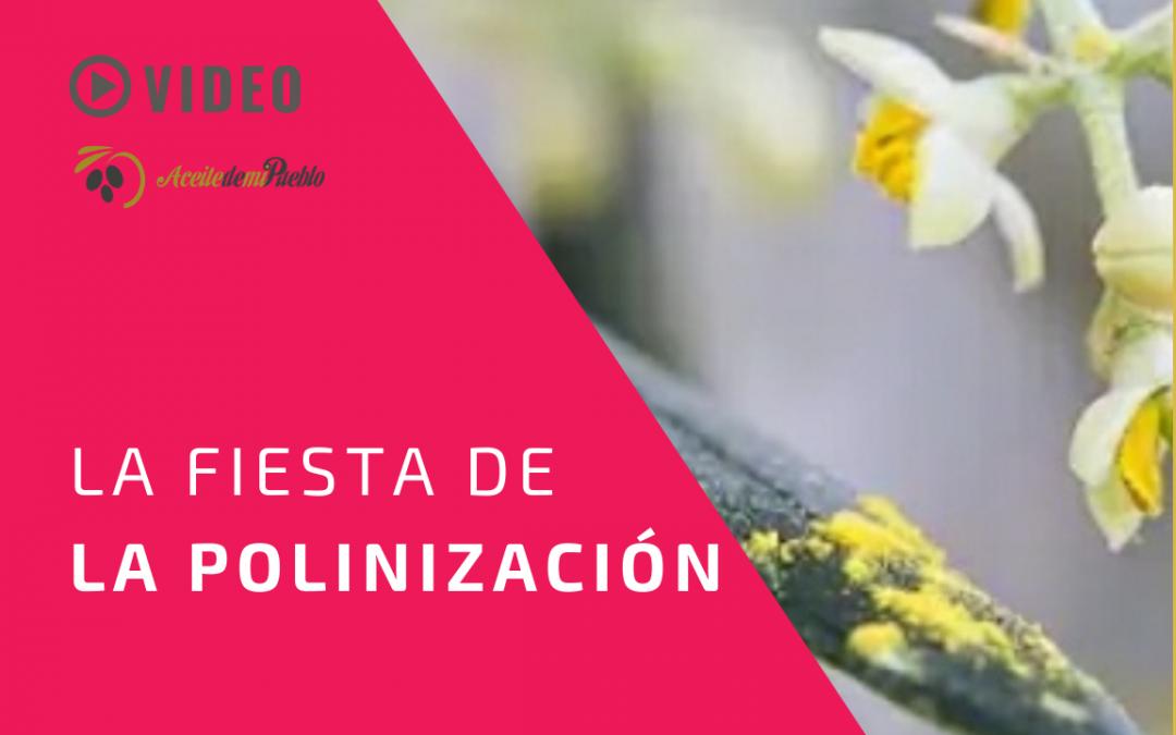 FIESTA DE LA POLINIZACIÓN